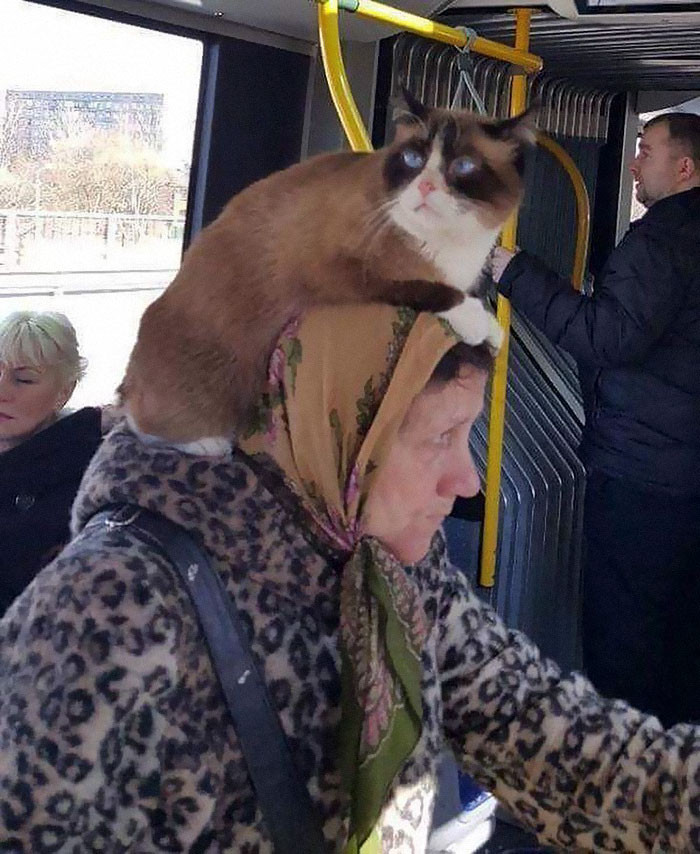Is that a hat or an actual cat?