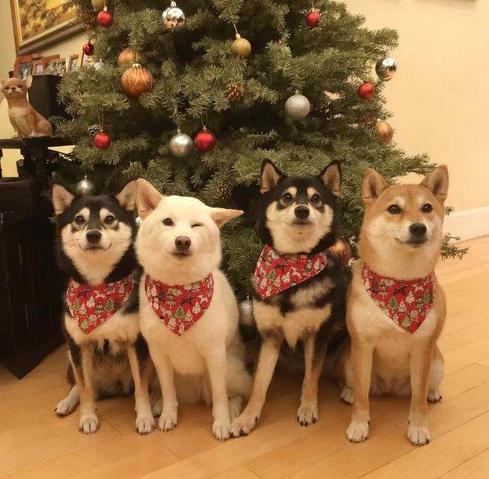 4. For this dog, the holidays are no time to let up.
