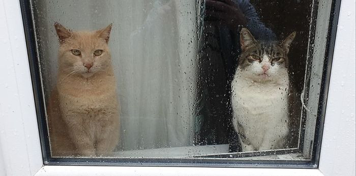 #26 I Do Have A Cat, He's The Cat On The Left. The Cat On The Right Is Not My Cat. He Would Very Much Like To Be My Cat. I Too Would Also Like Him To Be My Cat. My Actual Cat Disagrees With All Of This, And So Do His Owners