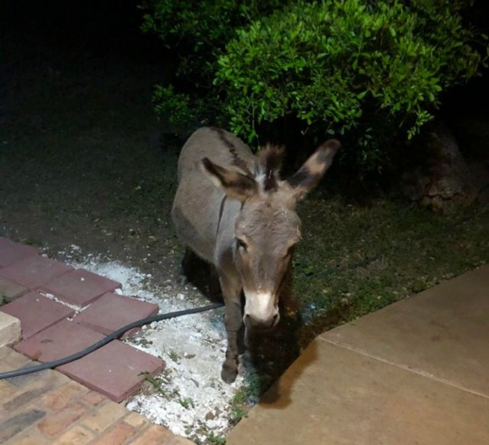 """11. """"This is what I was greeted with just before midnight when I took my dog for a quick walk before bed. We're staying at an Airbnb that has a donkey on the property. I didn't know donkey hugs existed before I met this sweetums. He's the goodest boy!"""""""