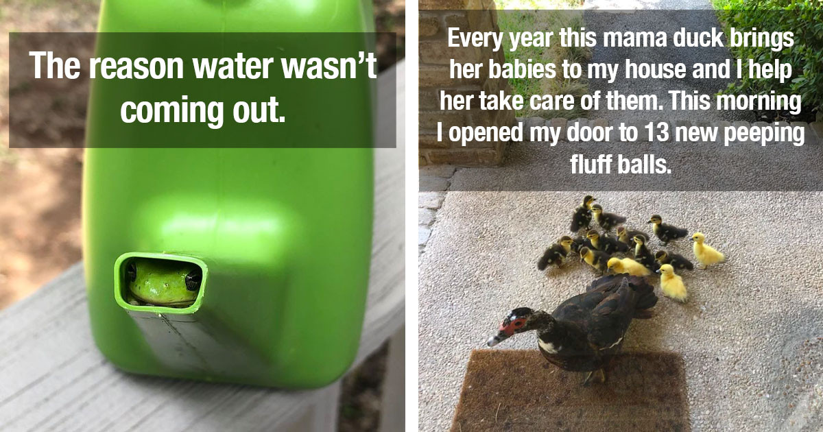50 Super Funny Posts For Anyone Who Loves Animals And Wants To Forget That The World Is A Mess