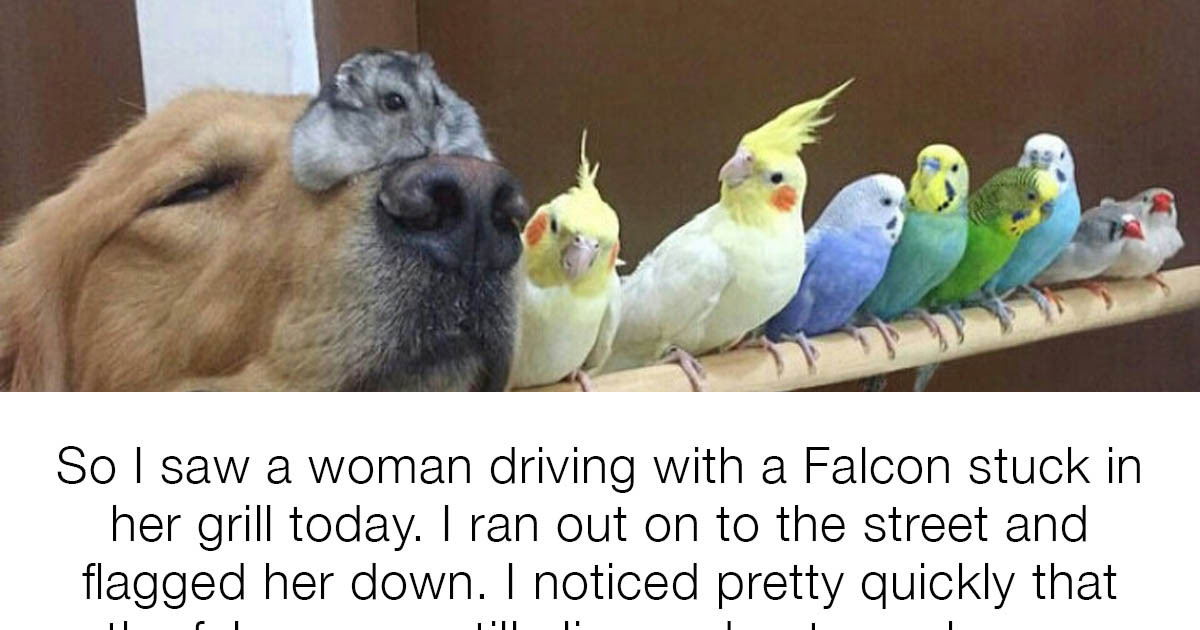19 Posts That Prove Birds Are Pretty Awesome