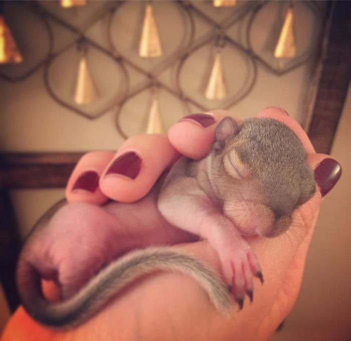 Thumbelina is an Eastern Grey Squirrel.