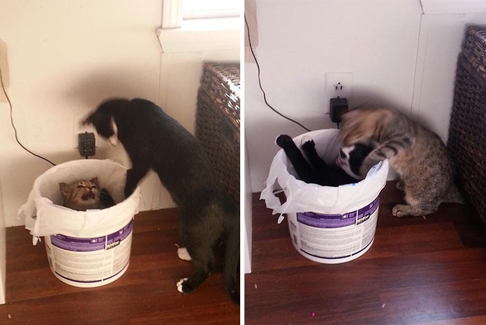27. Brutal Cat Fight??