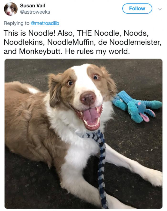 Noodle schmoodle