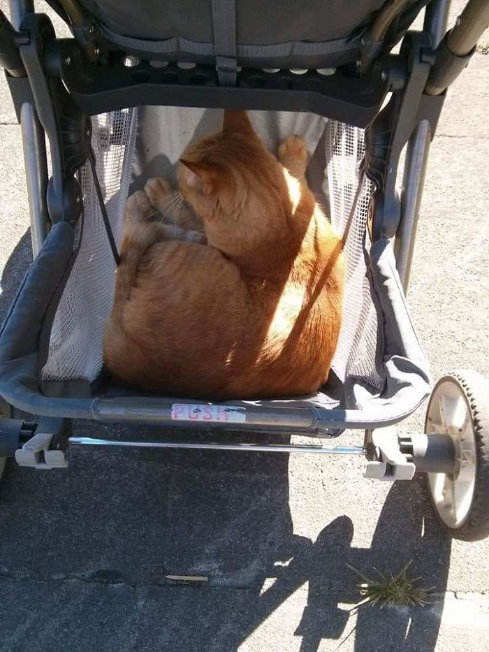 #24 My Stroller, Not My Cat. This Is Ralph. Ralph Decided He Wanted To Hitch A Ride Around The Neighborhood