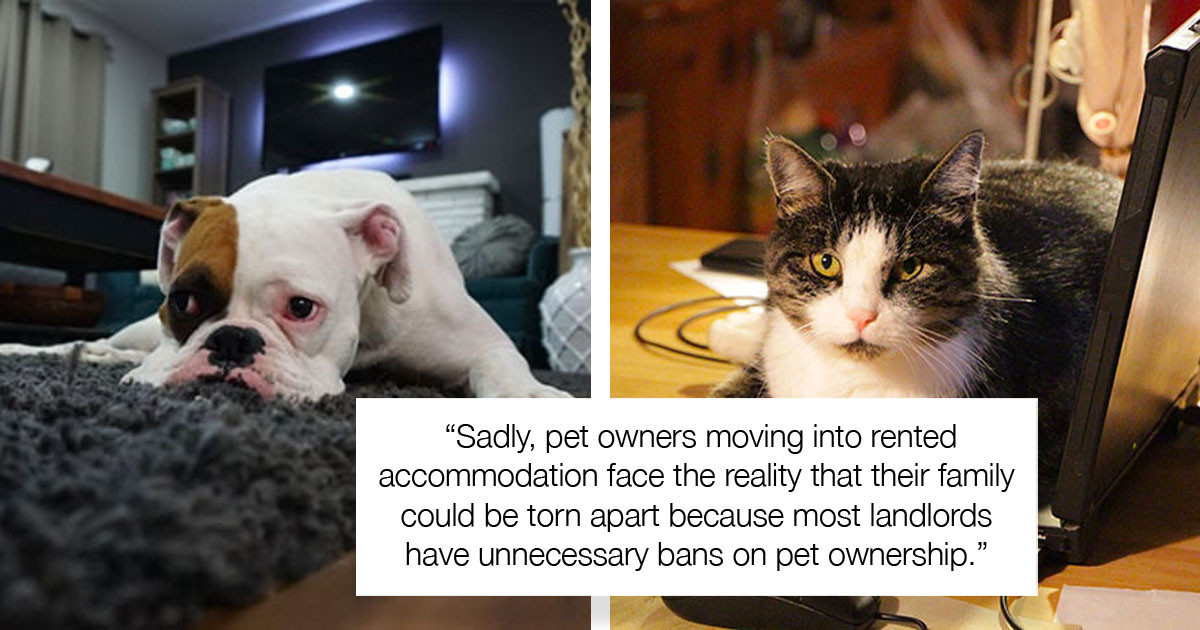 New Law In The UK Would Allow People To Keep Pets In Rented Apartments, But Landlords Don't Seem To Like It