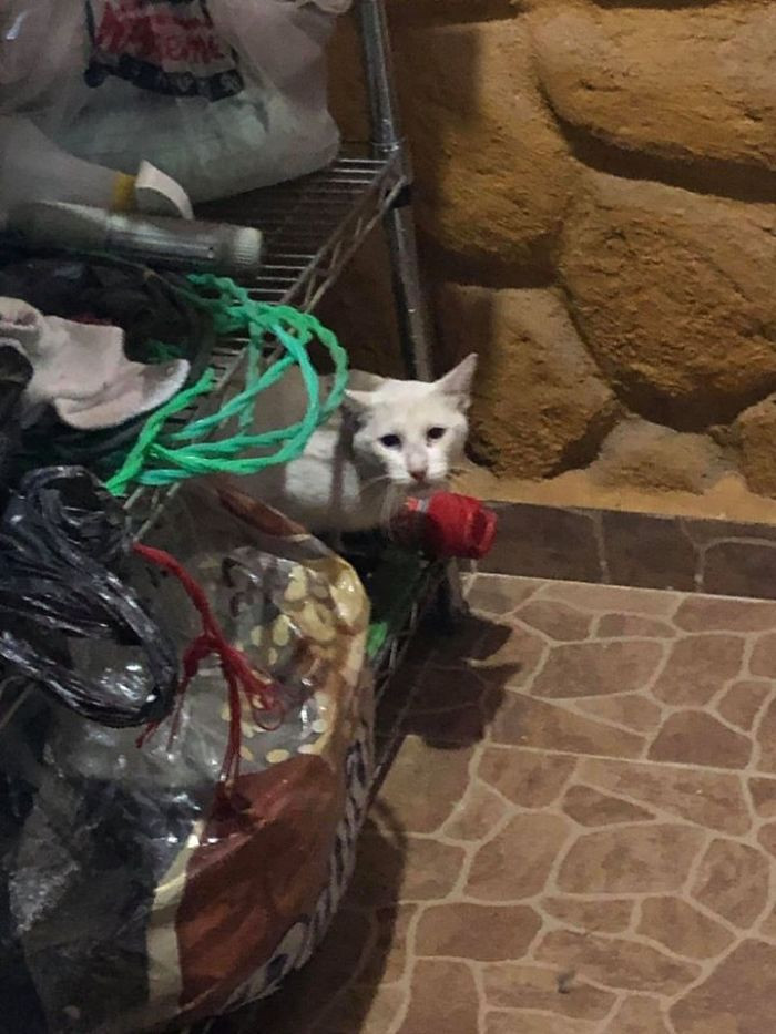 #22 My GF Ask Me Why Did I Put A White Cat In Our Laundry Room, Didn't Know What She Was Talking A Out, Send Me The Pic Felt In Love With Cat, Cat Is Now Part Of The Family