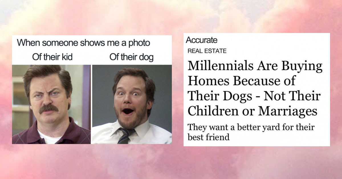 Memes That Explain Why Getting A Pet Is Better Than Having A Human Baby