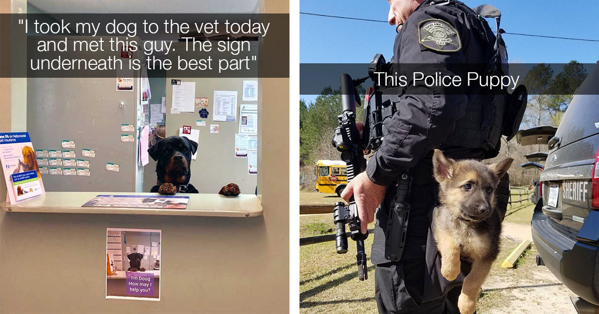 These Adorable Doggos Have Real Jobs And Deserve Your Appreciation