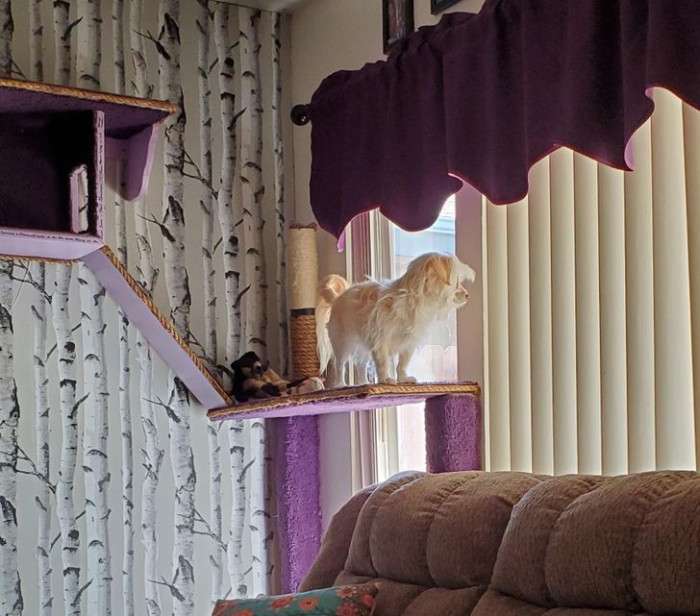 """20. """"This is Bell. She lives with 3 cats and at 4:45, she watches for her dad."""""""