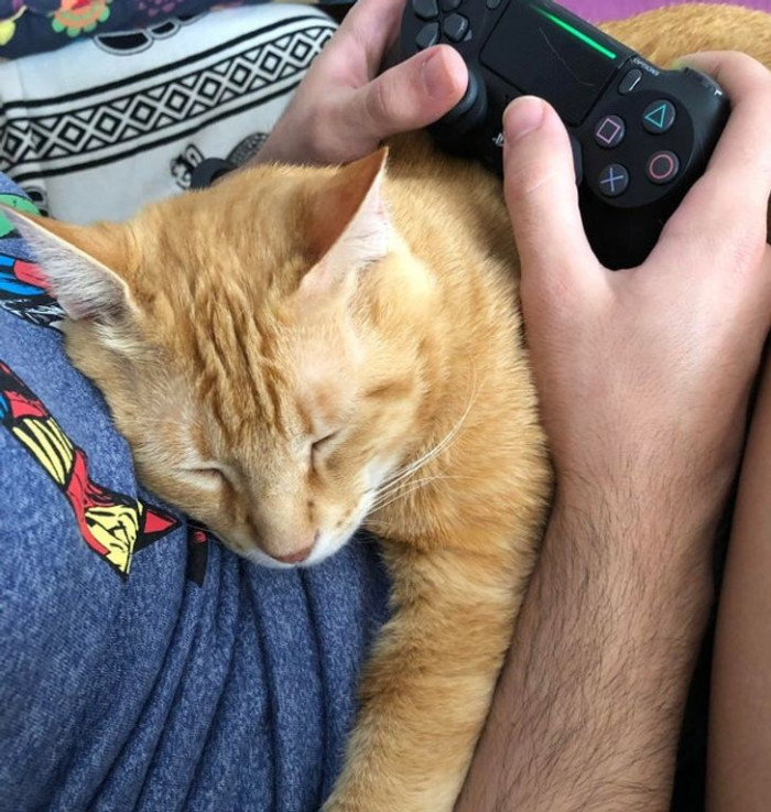 "20. ""The cat is sleeping while my boyfriend plays."""