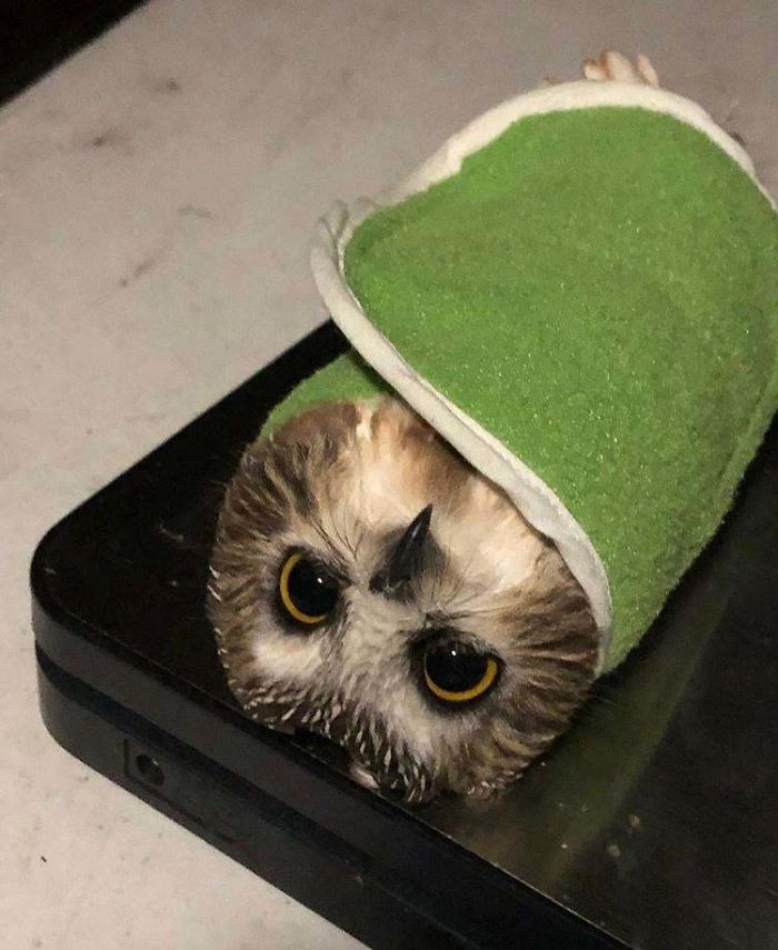 #28 I Work At A Bird Banding Station, And We Use Burritos To Weigh The Owls We Catch
