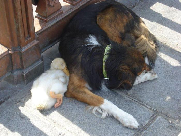 6. Duck And A Dog