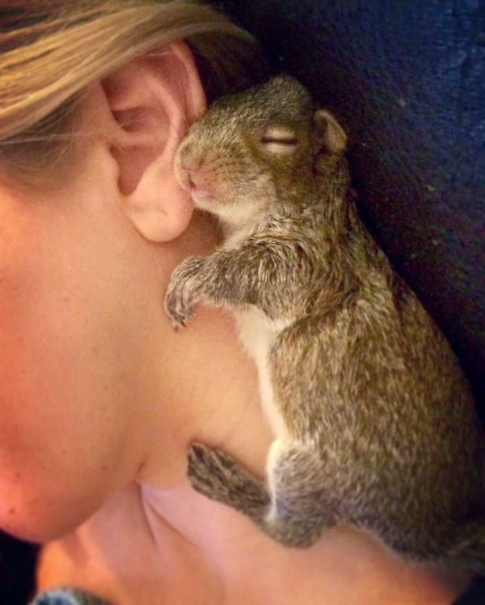 Her human caretakers did try to intergrate her with other Gray Squirrels, though.