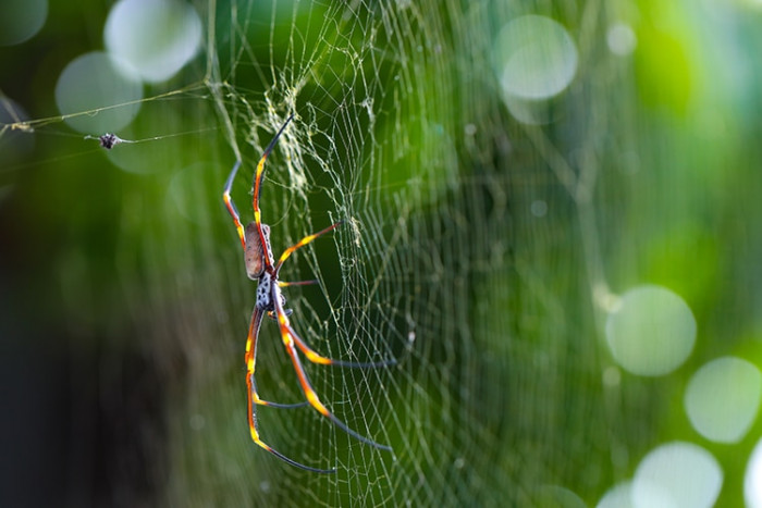 The vast majority of harmful spiders are nonlethal to humans.
