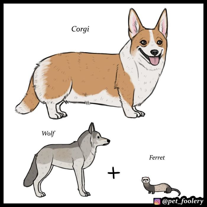 """""""I just thought it was funny how some dogs look so similar to wolves and some… don't… at all, even though they are all supposedly related,"""""""