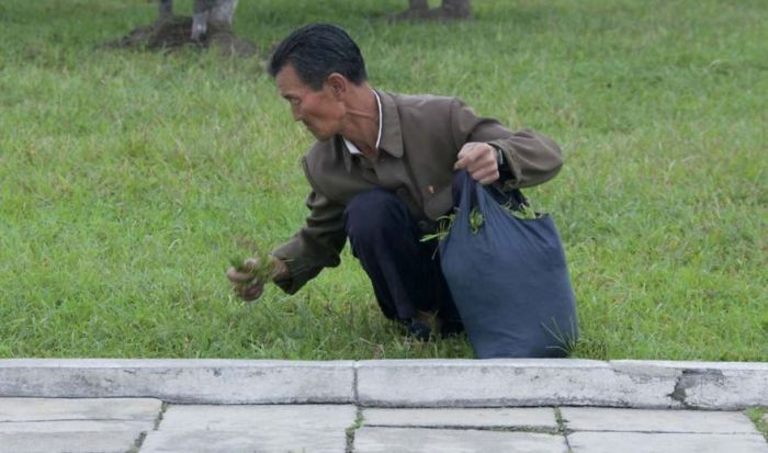 People in the parks often pick grass to eat. It obviously shows poverty, which officials hate.