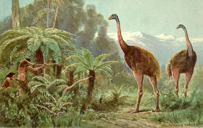 These birds lived in New Zealand.