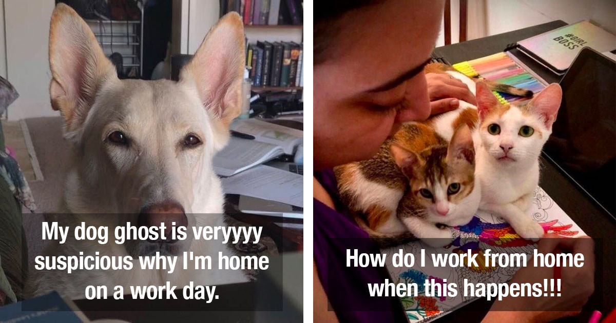 Pets That Are Totally Confused By Their Owners Who Are Now Working From Home
