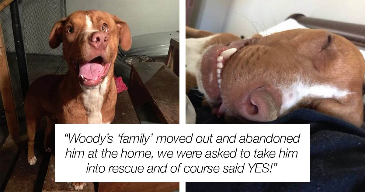Mauled Dog Left To Heal On His Own Is Left With A Crooked Face & Longing For A Forever Family