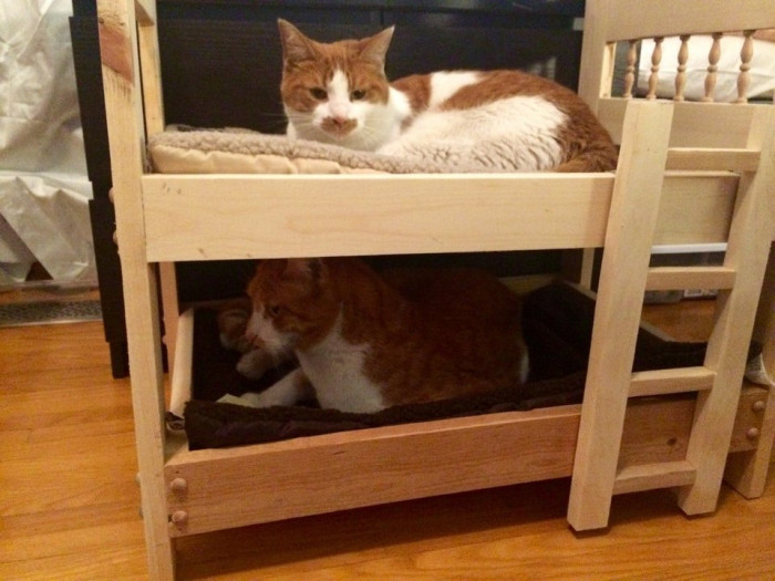 This anti-cat dad built bunkbeds for these cats.