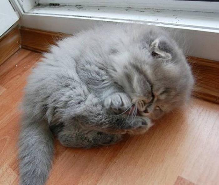 13. Little fluffy fat ball of kitten