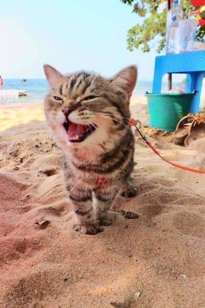 Or playing in the sand - the adorable cat was on thrilled beyond belief.