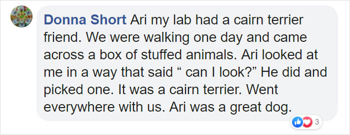Ari sounds like a brilliant dog.