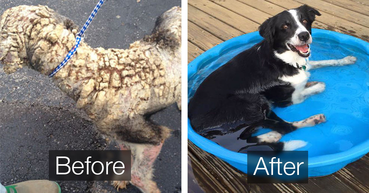 Amazing Rescue Dog Transformations Show What a Little Bit Of Love Can Do