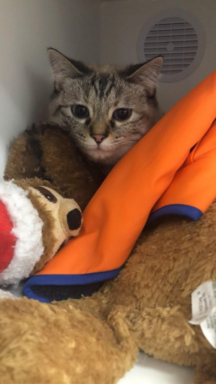 4. Brave Mia today recued little kitten with flea anemia by donating blood and was rewarded with new toys and some yummy treats