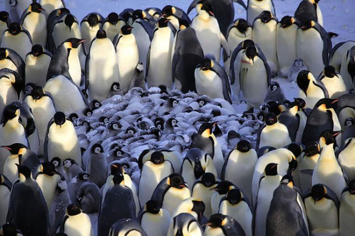 1. Family of Penguins