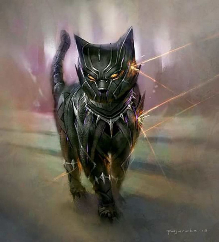 5. Black-Kitteh