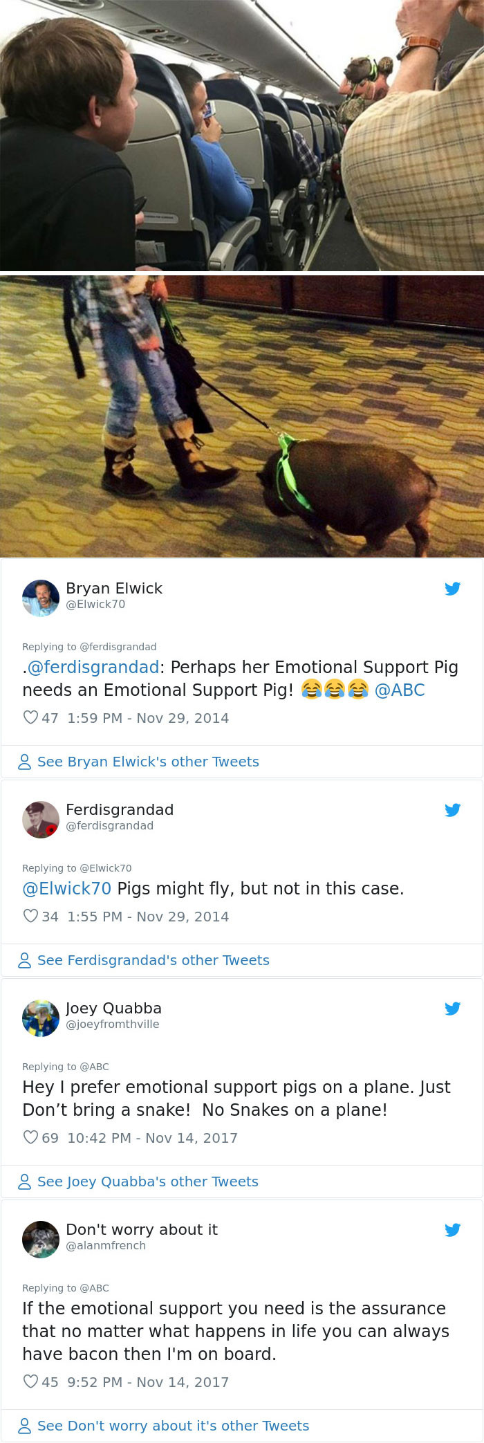 3. This emotional support pig was kicked off a flight because he was being