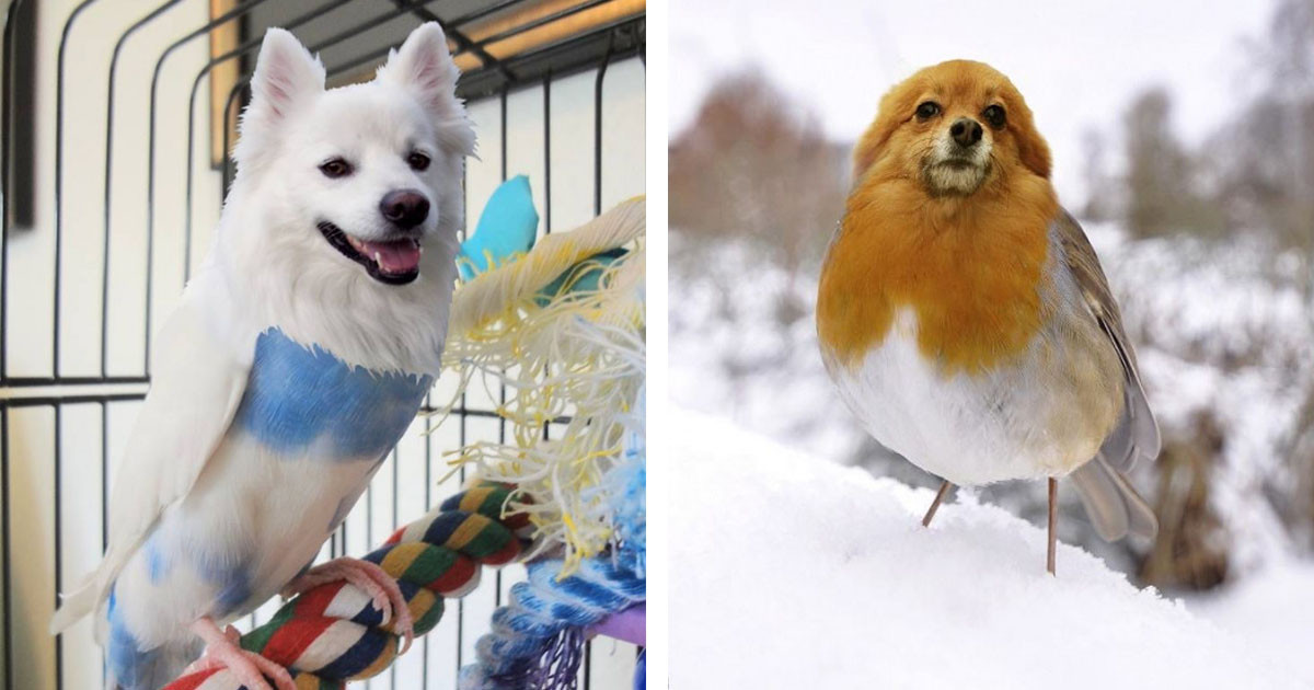 Somebody Edited A Bunch Of Photos Of Dog-Bird Hybrids And The Result Is Something Out Of An Adorable Storybook