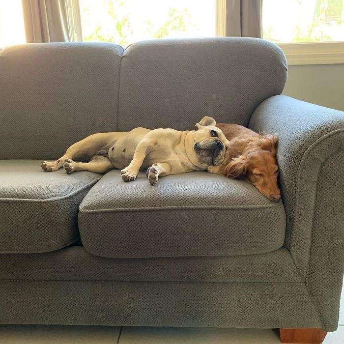 22. I Went To The Shelter To Adopt A Dog, And I Found Those Two In This Posture, I Couldn't Separate Them So I End Up Adopting Both Of Them