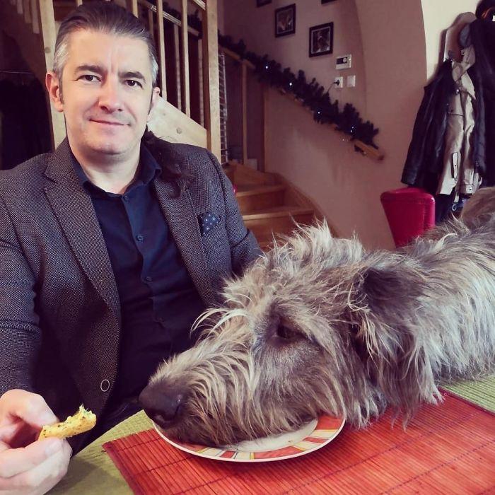 12. Doggo served on a plate