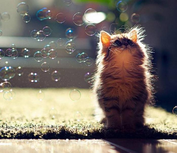 11. Bubbles!