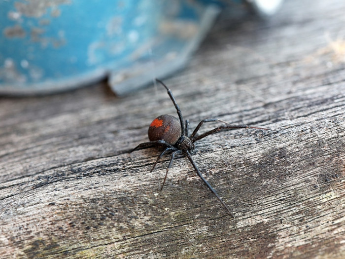 Less than 50 of over 2000 known spider species are harmful to humans.