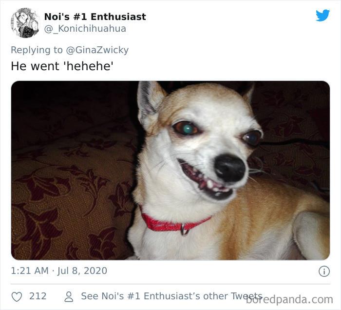 15. Crack head doggo