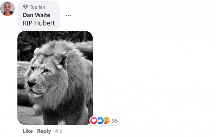 Fans began to post their stunning pictures of the lions in tribute...