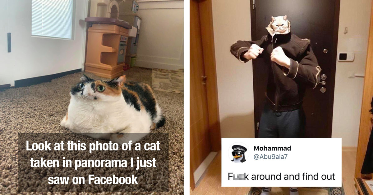 Here Are All The Best Cat Pictures And Videos From The Last Few Weeks Ready To Make You Smile