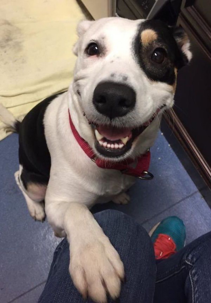 """""""The face of a newly adopted pupper,"""""""