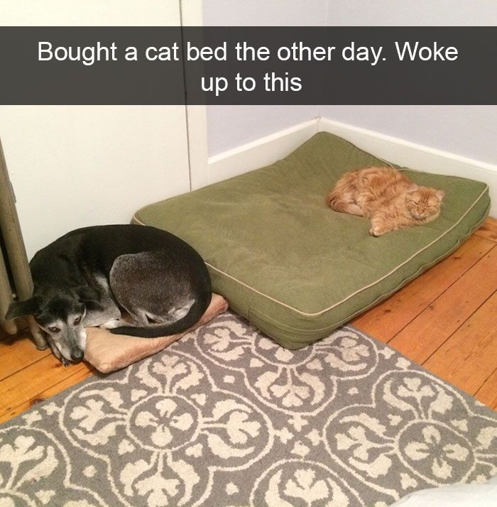 123. Dogs and Cats
