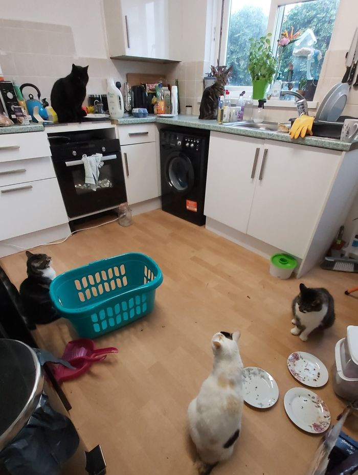 #13 I Went To My Kitchen To Get My Washing Out Of The Machine And Feed My Cats, But Walked Into Five Cats In My Kitchen. I Only Have Three!
