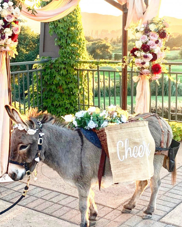 The little burros make any event extra special!