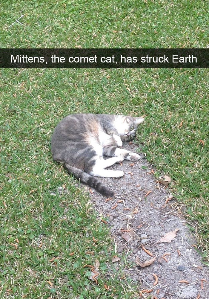 67. Next time your kids ask you where kittens come from...