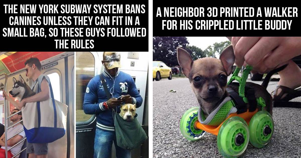 10+ Awesome Dog Owners Who Did Some Incredible Things For Their Dogs