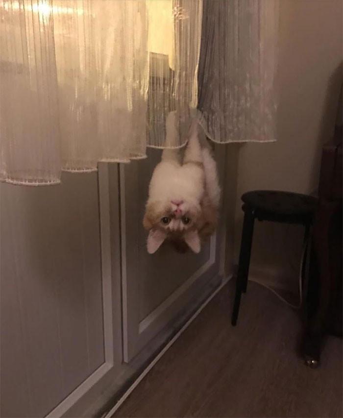 16. Spider Cat