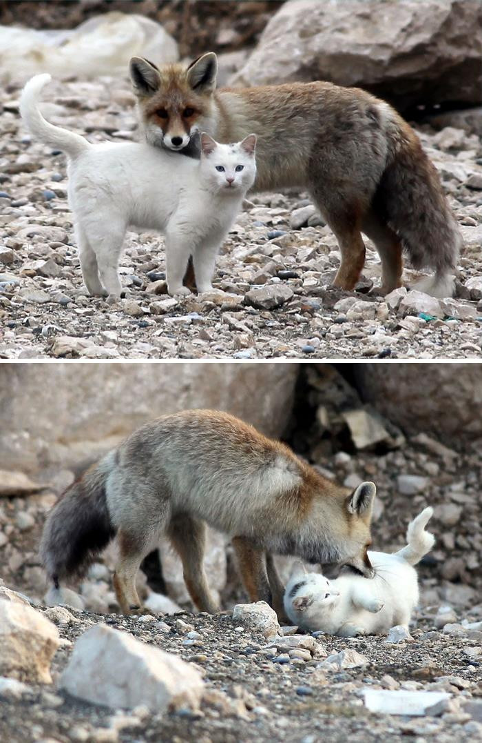 4. Cat And Fox Are Best Friends